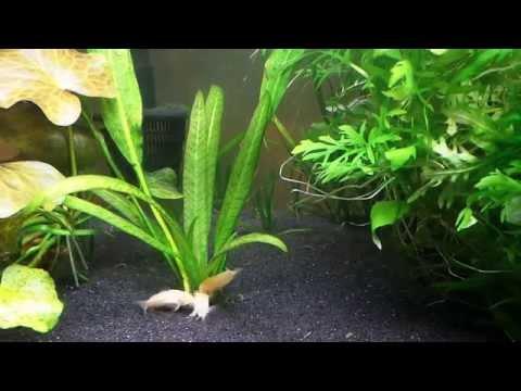 Feeding Time In The Corydoras Tank