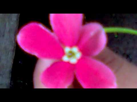 ภาพดอกไม้สวยๆ