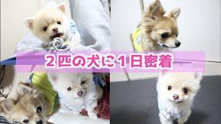 【1日密着】外出自粛中の犬に密着!!