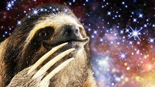 Make a sloth's dreams come true in more Animal Super Squad! Duck Li...