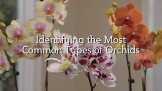 Identifying the Most Common Types of Orchids