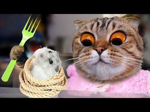 STRANGE DAY FOR CATS AND THE SECRET HAMSTER