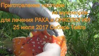 Приготовление настойки из мухоморов для лечения рака и онкологии 25 июля 2017 Сибирь Сбор грибов