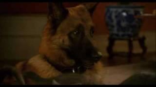 Como Cães e Gatos 2: A Vingança de Kitty Galore - Trailer Português