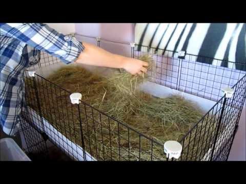 How i clean my guinea pig c c cage with megazorb bedding for How to clean guinea pig cages