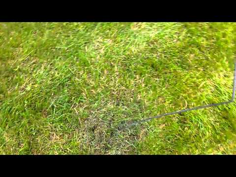 How to get rid of ants in your lawn for $2