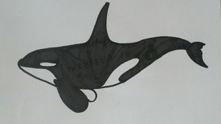 """Como desenhar a """"free willy"""" baleia orca passo a passo !!!"""