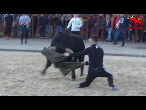 8º Toro De San Blas. Viana De Cega. 1 Febrero 2020