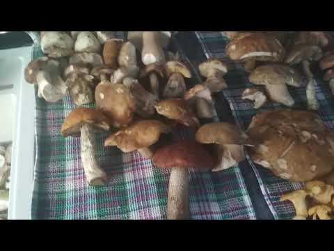 Как избавиться от червей в грибах