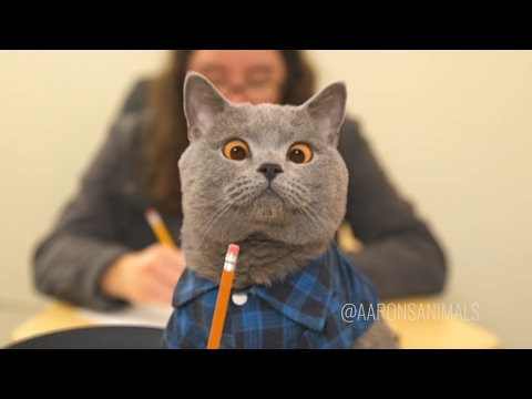 Aaron\'s Animals NEW VIDEO COMPILATION 2017 || FunnyVines