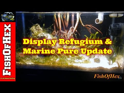 Display Refugium And Marine Pure Update | Subscriber Request