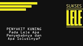 sakitkuning #ayampucat #rawatanayam SEMOGA BERMANFAAT JANGAN LUPA SUBSCRIBE , LIKE & KOMEN ya.. INFO.