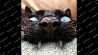 Кот погрыз провод зарядку как починить