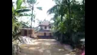Land / Farmhouse 13 Acre Rubber, Paddy, Mudpak at Ernakulam Dst...45 Lakh/Acre
