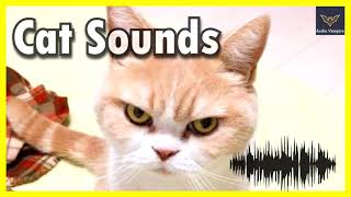 Funny Cats Voices To Tease Your Dog