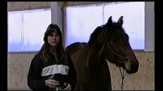 Начальное обучение  Часть 2   Работа с не подготовленной лошадью