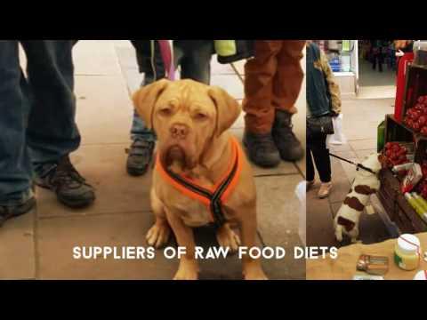 Durham Dog Care..... Holistic Dog Training & Nutrition