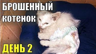 Брошенный котенок День второй Спасение бездомного котенка