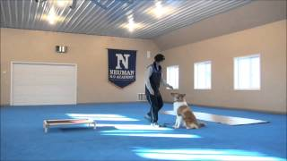 Rosie (rough Coated Collie) Dog Training Boot Camp Video