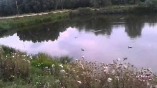 Киев 124, Нашел еще одно озеро с утками, рыбалка, отдых на озере(Киев 124, Нашел еще одно озеро с утками, рыбалка, отдых на озере Для получения свежих видео подпишись на канал...., 2014-09-12T13:23:50.000Z)