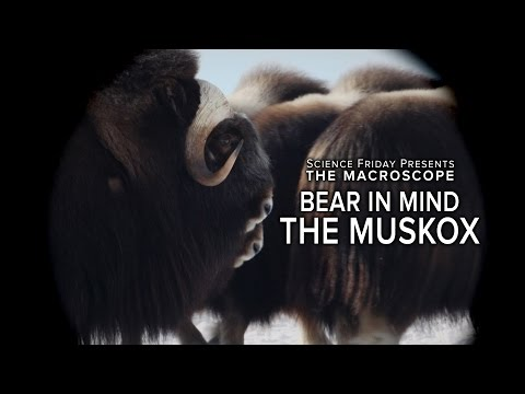 Inside the Mind of a Musk OX on YouTube
