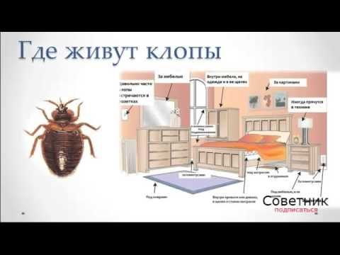 признаки заражения паразитами у человека