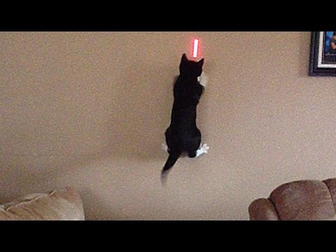 Cats Vs. Lasers: The Ultimate Showdown
