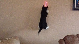 cats vs lasers the ultimate showdown