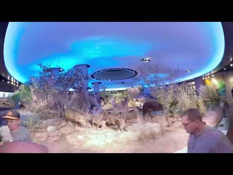 The Witte Museum in 360 Naylor Family Dinosaur Gallery