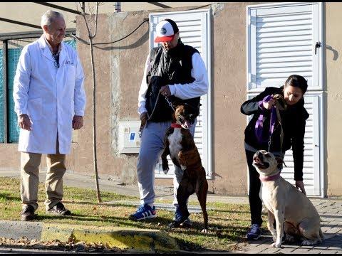 San Fernando encontró un hogar para la pitbull Agustina from YouTube · Duration:  1 minutes 54 seconds