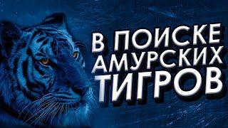 """Фильм """"В поиске амурских тигров"""" (короткометражка) 2018"""