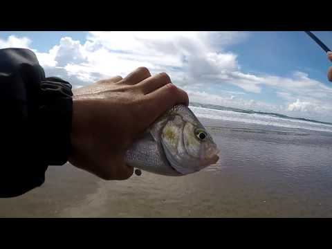 Surf perch fishing/ Fishing the Oregon coast.