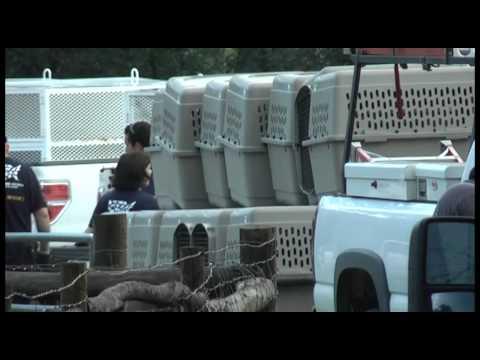 071712 HUNDREDS OF DOGS SEIZED