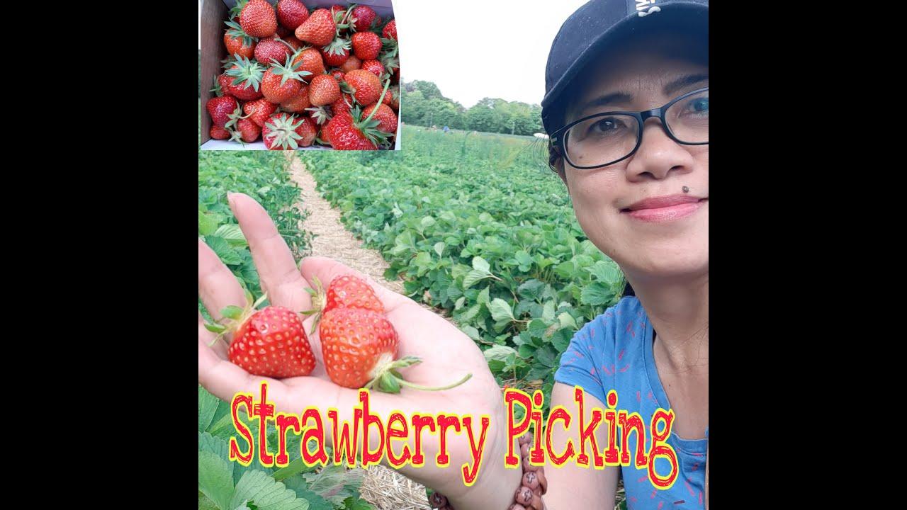 Storz Erdbeeren