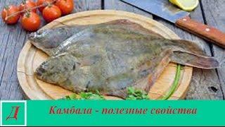 Камбала - полезные свойства рыбы