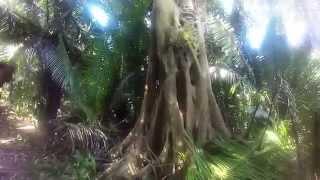 Monkey River Tour w/ Percy Gordon (Bare Bone