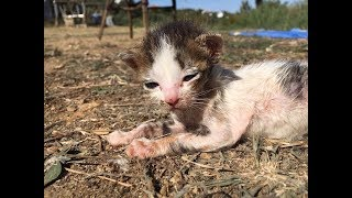Skiathos Cat Welfare Association