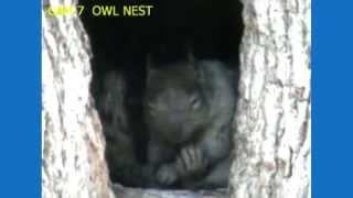 Squirrel Sleeping In Owl Nest
