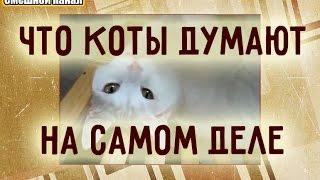 Что коты думают на самом деле!?