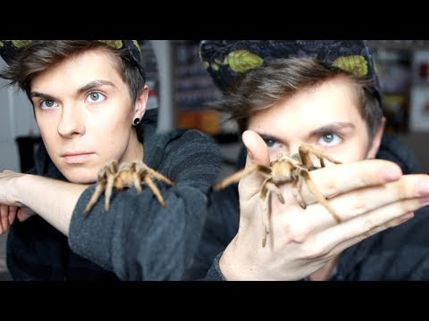 5 Reasons Tarantulas Make Awesome Pets!
