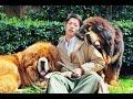 El perro más caro del mundo cuesta casi 2,000,000 de dolares