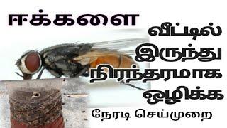ஈக்களை நிரந்தரமாக வீட்டிலிருந்து  ஒழிக்க / Get rid of house flies naturally in Tamil
