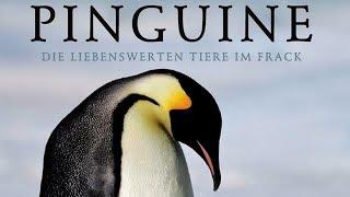 Pinguine - Die liebenswerten Tiere im Frack (2013) [Dokumentation]|Film (deutsch)