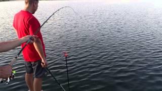 Рыбалка в Донецкой области. Белый Амур на Георгиевке