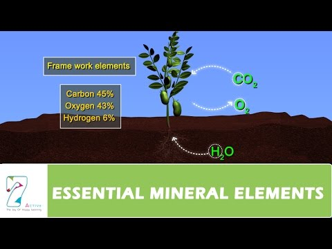 ESSENTIAL MINERAL ELEMENTS PART 01
