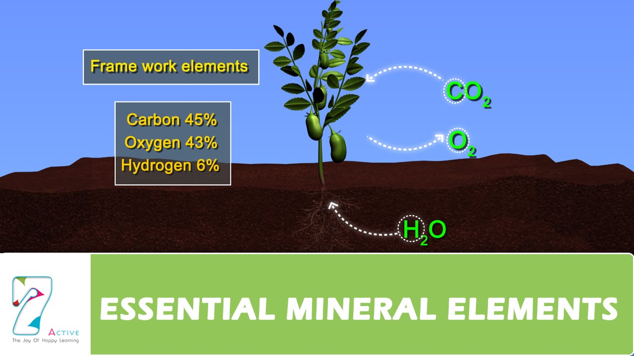 Essential mineral elements part 01 youtube for 0 4 soil carbon