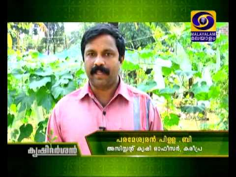 Commercial Organic Farming | ജൈവ കൃഷി