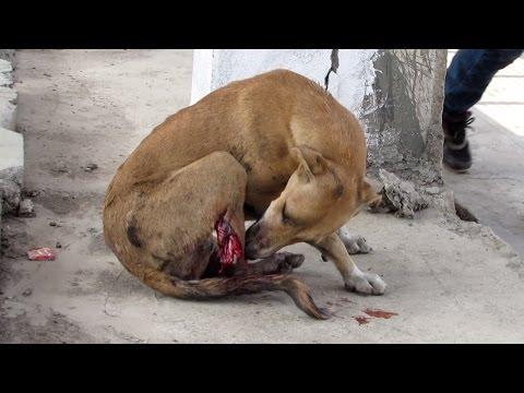 Leg cut off by train, sweetest dog still wags tail