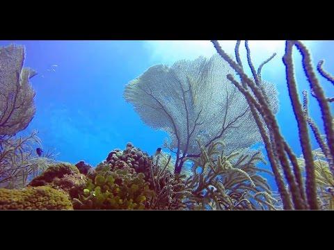 bahamas 2015-  shark dive/ blue hole/ tiger beach