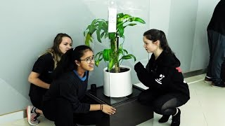 Students Bullied A Healthy Plant For 30 Days, This Is What Happened.